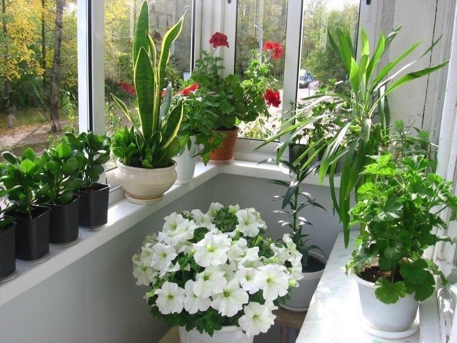 Где купить цветы для дома